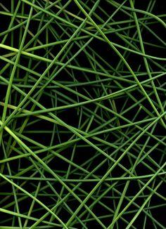 54361 Allium schoenoprasum by horticultural art, via Flickr