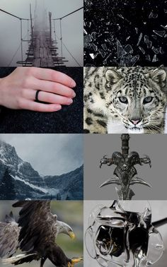 Queen of Shadows by Sarah J. Maas collage !!  Pics according to the book (spoilers!): from the top-left corner: a) the scene where Manon and Aelin fought near the bridge, b) shattering glass=glass castle in ruins, c) wyrdstone ring, d) Lysandra as a ghost leopard, e) mountains=Morath, f)  the sword of Orynth, f) Rowan in his hawk form, g) black glass roses which were held by the dancers at the birthday party. :)