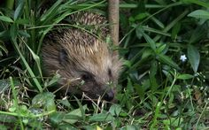 How to Make Your Garden Accessible to Wildlife