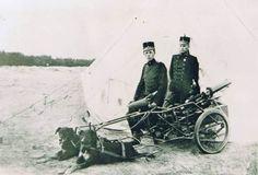 trekhonden 1914 - Google zoeken
