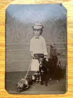 Rare Antique Tinted Tintype Photo Beautiful Girl with Her Greyhound & Cattle Dog