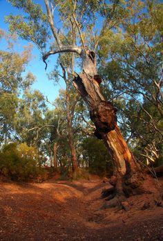Australian Native Flowers, Australian Bush, Landscape Sketch, Landscape Paintings, Tasmania, Australia Landscape, Fantasy Forest, Forest Photography, Aussies