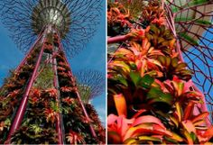 """Conceived as """"environmental engines"""" for the """"city in a garden"""" below, these impressive structures are envisioned as a natural cooling system for the buildings below, while also biomimicking some of the ecological functions of trees: collecting & pumping water, absorbing & dispersing heat, and also generating electricity with solar photovoltaics for lighting up the Supertrees at night. Singapore is doing it right. via treehugger"""