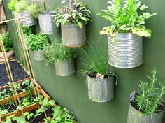 Recycling old coffee cans into planters...this would be cool on the outside of a shed.