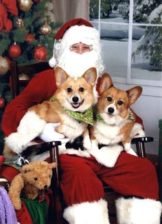 Jasper and Franny with Corgi Claus