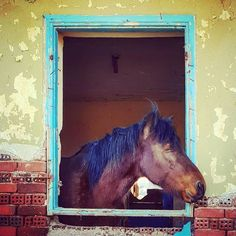 Think out of the box #brightfuture #newideas #beauty #horselove