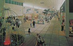Vintage Postcard Photo 1960s SHOPPING MALL Colonial Plaza Orlando FLORIDA