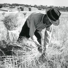 Artur Pastor foi um fotógrafo português (n. 1 de Maio de 1922, em Alter do Chão, f. 1999): Ceifa de Tremês, 1954 Old Pictures, Old Photos, Vintage Photos, History Of Portugal, History Of Time, Nostalgic Pictures, Classic Image, Photographs Of People, Image Photography