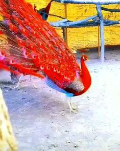 Pretty Animals, Unique Animals, Pretty Birds, Nature Animals, Cute Funny Animals, Cute Baby Animals, Beautiful Birds, Animals Beautiful, Animals And Pets