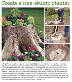 If the front yard tree ever has to come down, this is a great idea for the stump!