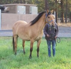 SpringWater Station Kiger Mustang Breeder , Kiger breeding and Kiger Sales