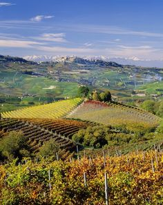 A Guide to Barolo Vintages | Best Years for Barolo #Piemonte #Italy #vineyards