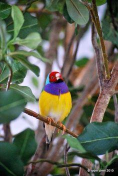 Wonderful wildlife and nature