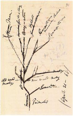 charles darwin - sketch of primates' evolutionary tree, 1868, ink, darwin papers, cambridge university library.