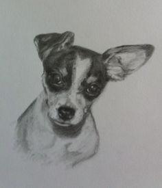 "Rat terrier ""Ripley"" from Nevada"