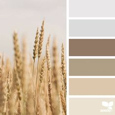 Nature Colors Palettes – Fubiz Media