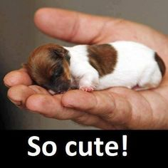 #puppy #cute #funny #love #dog