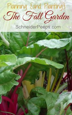 Gardening doesn't stop with the end of summer. Fall and even winter is a great time to garden. But it takes some planning. Learn how to plan your fall garden.