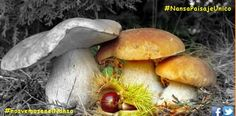 Jornadas Micológicas del Nansa - Turismo de Cantabria - Portal Oficial de Turismo de Cantabria - Cantabria - España