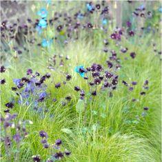 the Naturally Norway garden via Studio G