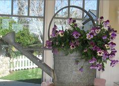Pansies in watering can Flower Planters, Garden Planters, Container Plants, Container Gardening, Outdoor Plants, Outdoor Gardens, Flower Boxes, Pansies, Garden Inspiration