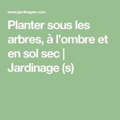 Planter sous les arbres, à l'ombre et en sol sec | Jardinage (s)