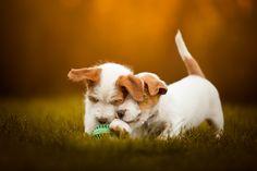 A mess of Puppies :) by Cecilia Zuccherato - Photo 127566883 - 500px