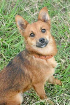 Check out Foxy on Petfinder!  https://www.petfinder.com/petdetail/38612026/