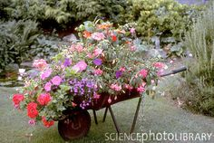 I like the way the plants spill out of this....Google Image Result for http://www.sciencephoto.com/image/72100/large/B9160035-Wheelbarrow_planter-SPL.jpg