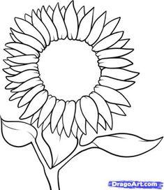 Sunflower Outline - ClipArt Best
