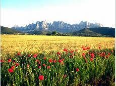 muntanya de montserrat - Bing images