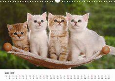 We are gorgeous, right? CALVENDO calendar by Petra Wegner - http://www.calvendo.de/galerie/mit-katzenkindern-durch-das-jahr/ - #katzen #katzenbabies #kitten #cats #cat #calvendo