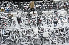 GigaPica : The Netherlands covered in snow Amsterdam, Winter Cycling, Wonderful Picture, Jack Frost, Winter Christmas, Netherlands, Holland, Photo Wall, Bicycles
