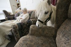 Hoofbeats On The Heart; little horses with a big mission (Photos) | OregonLive.com