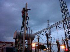 Utility Pole, Bali, Plants, Cable, Flora, Plant, Planting