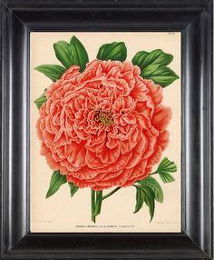 BOTANICAL PRINT Wendel 8x10 Botanical Art Print by FleurDeNature