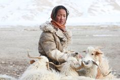 Sonam (pictured) is responsible for ensuring her young family's goats get milk and food - a tough mission when most grazing land is below a thick layer of snow