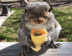 America's Funniest Home Videos eating eat afv squirrel