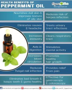 Peppermint oil - so much more than candy! ~ Eliminates nausea & headache, Increases immunity, Aids in digestion, Increases blood circulation, Reduces fungal nail infection, Aids bad breath & healthy gums, Treats urinary tract infections, Clears respiratory tract, Mental activity, Promotes healthy hair growth, Pain Relief, Effective for gastroscopy & colonoscopy