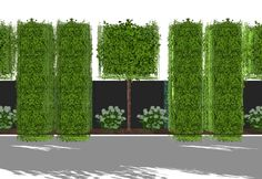 HPL hedge-at-the-yard trellis trees and box-shaped tr, . Screening HPL hedge-at-the-yard trellis trees and box-shaped tr, Screening HPL hedge-at-the-yard trellis trees and box-shaped tr, Garden Hedges, Garden Privacy, Garden Fencing, Lawn And Garden, Diy Trellis, Garden Trellis, Patio Plants, Landscaping Plants, Landscaping Ideas