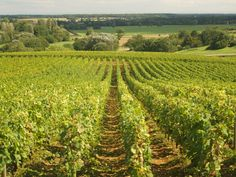 Doing my darned-est to get my hubby to submit a wine marketing paper to a conference in Dijon, France