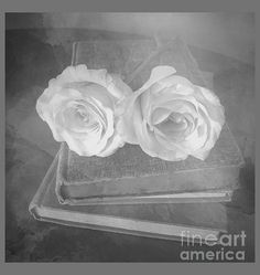 Roses Photograph - Gray Vintage Roses by Luther Fine Art Romantic Scenes, White Image, Flower Show, Vintage Vibes, Luther, Medium Art, Black And White Photography, Beautiful Images, Fine Art America