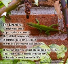 The Lizard reminds us to pay attention to our own perceptions. Hear what is not said. See what others may miss. Feel what others may not. Trust your intuition. Let go of energies that do not serve your growth.