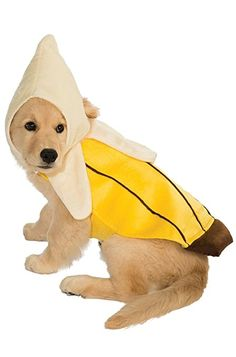 This is a collection of Halloween pet costumes. pet dresses Cat Clothes Costume Sex Nurse Suit Clothing For Halloween Costume. Best Dog Halloween Costumes, Cute Dog Costumes, Puppy Costume, Halloween Snacks, Halloween Cupcakes, Diy Halloween, Vintage Halloween, Costume Ideas, Family Halloween