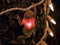 Just eatin' some Christmas lights.