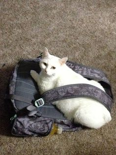Back to school cats