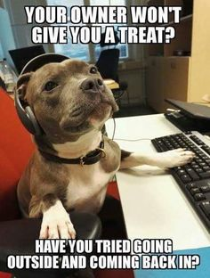 """""""Thank you for calling Dog Support, how may I help you?"""" #dogs #funny #doglovers"""