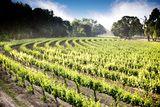 """Lodi Wine: Get the Lowdown on Lodi Wineries and Vineyards."" About.com. Written by Stacy Slinkard. #Lodi #wine"
