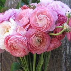 'Lush Us' - pink ranunculus. Get 'em before they're all gone!