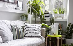 A beautiful white interior with a budding indoor garden